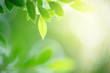 canvas print picture - Closeup nature view of green leaf on blurred greenery background in garden with copy space for text using as summer background natural green plants landscape, ecology, fresh wallpaper concept.