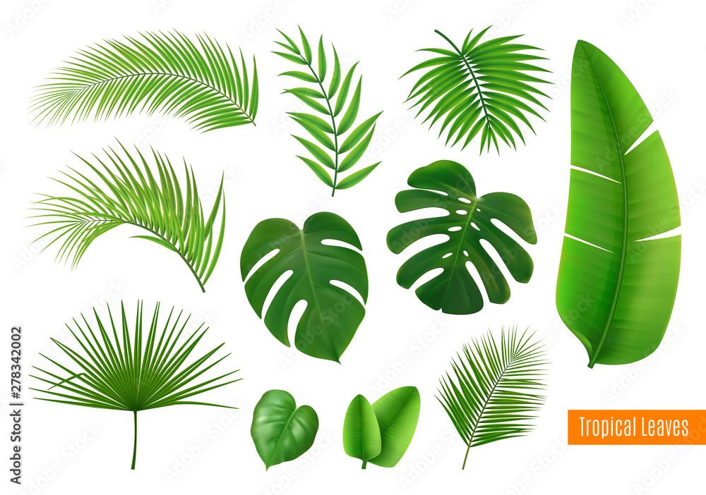 Fototapeta Tropical Leaves Realistic Set