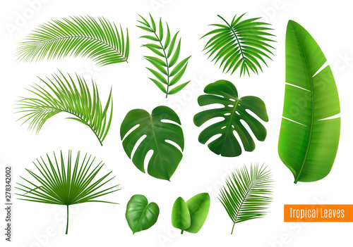 Obraz Tropical Leaves Realistic Set - fototapety do salonu