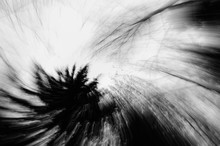 Abstract Zoom Circle Motion Blur Background Of The Lone Tree In Black And White
