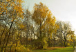 Park in Kolomenskoye. Moscow. Russia