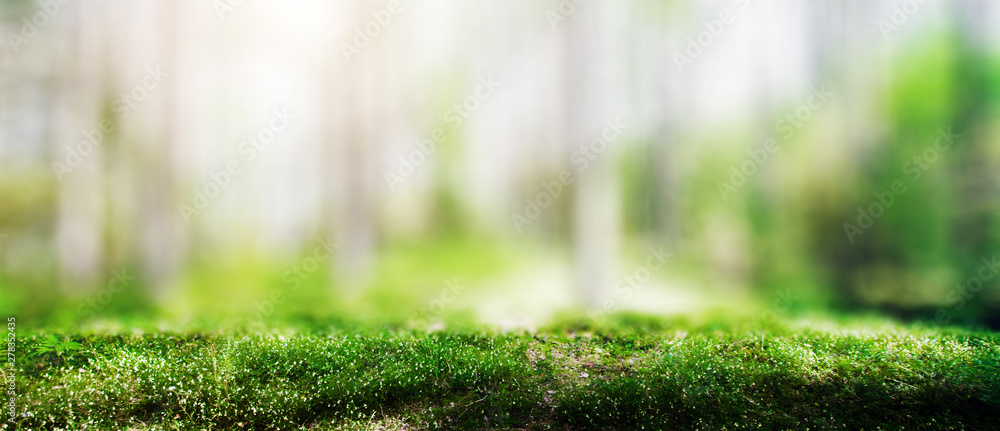 Fototapeta Wild trees in forest