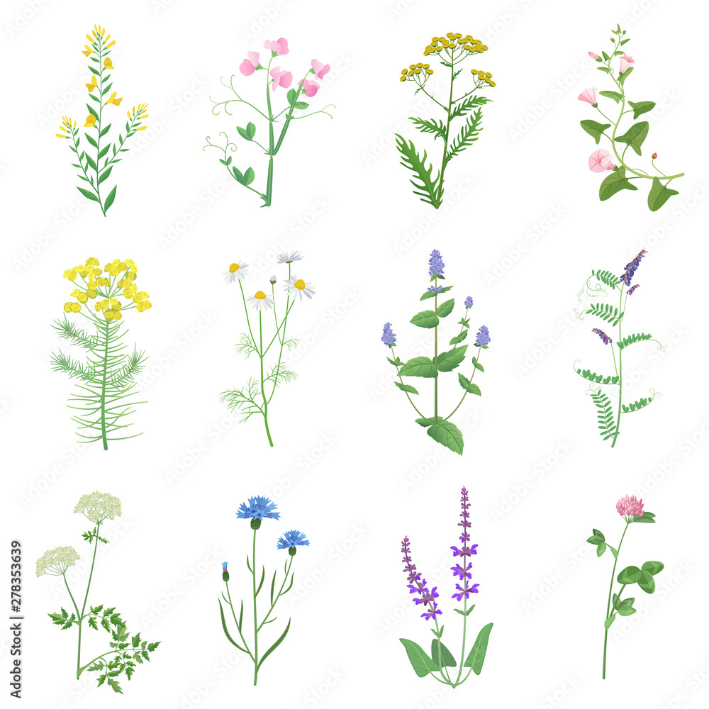 Fototapety, obrazy: Wild herbs color set isolated. Wildflowers, herbs, leafs. Garden and wild foliage, flowers, branches vector illustration.