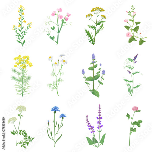 Wild herbs color set isolated. Wildflowers, herbs, leafs. Garden and wild foliage, flowers, branches vector illustration. Wall mural