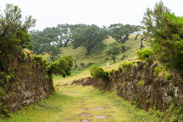 Fototapeta na wymiar Madeira - Wanderung im Lorbeerwald: