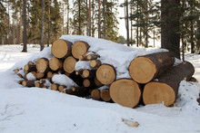 Tree Trunks At Sawmill, Horizontal Picture