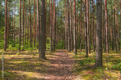 Photo Stands Road in forest Path with cones.