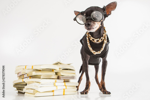 Photo A small doggy with banknotes
