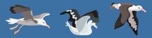 Bird Albatross Flat Style Cartoon Collection