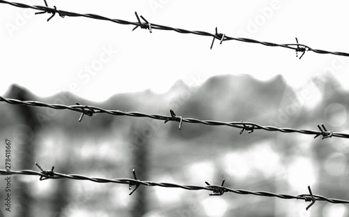 Fototapeta three lines of barbed wire with thorns