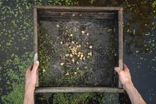 Sifting Soil In Water Through ...