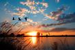 Leinwandbild Motiv Geese flying over a beautiful sunset.