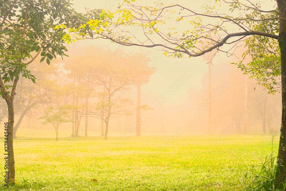 Fototapeta Niebla en el parque  - obraz na płótnie