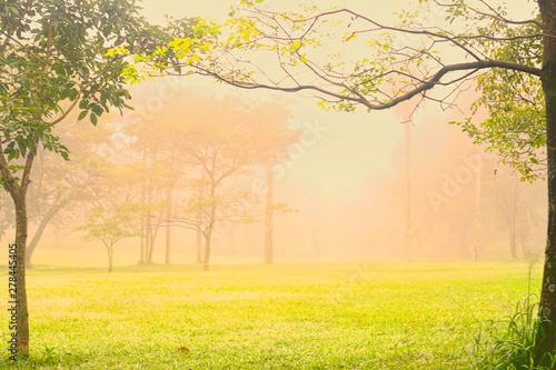 Fototapeta Niebla en el parque  obraz na płótnie