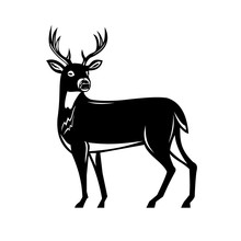 Retro Woodcut Style Illustration Of A White-tailed Buck Deer, Whitetail Or Virginia Deer, A Medium-sized Deer Native To North And South America Side View On Isolated Background Done Black And White.