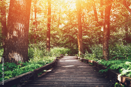 Wooden pathway or walkway from wood planks in forest park in sunlight summer day