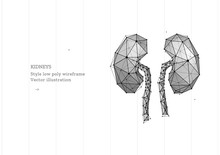 Abstract Polygonal Light Of Healthy Kidneys Structure. Business Wireframe Mesh Spheres From Flying Debris. Human Organ Concept. Blue Structure Style Vector Illustration With Geometry Triangles.