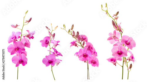 Fototapeta Blurred for Background.Pink orchid flower on white background. Photo with clipping path. obraz