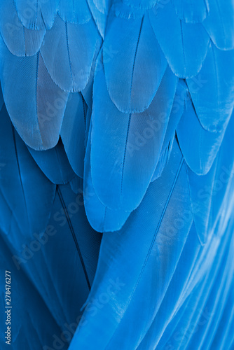 Closeup blue and gold macaw feathers - 278476277