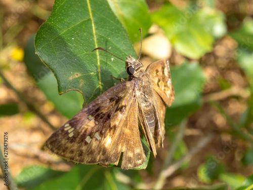 Close up of a moth.