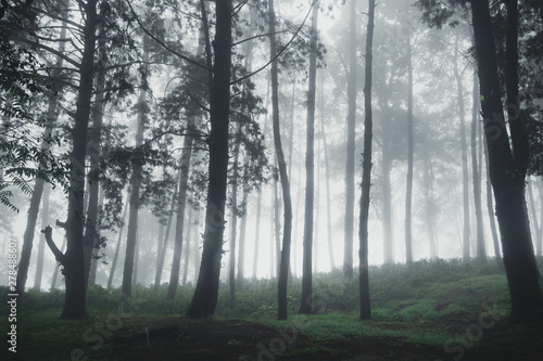 Forest Rain and fog On the Moutain