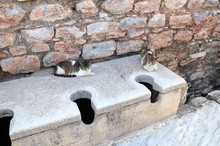 Two Cats In Ancient Public Toilets, Antique City Ephesus, Turkey
