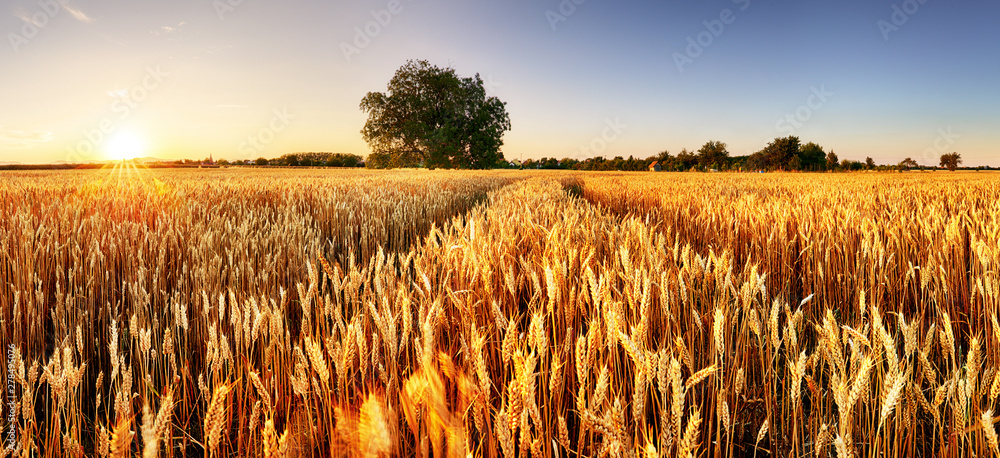 Photo  Wheat flied panorama with tree at sunset, rural countryside - Agriculture