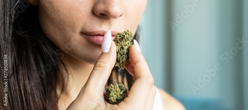 Big marijuana buds in hands close-up Canvas Print