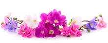 Violets Beautiful Flowers, Bac...