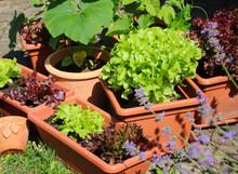 Gemüsegarten  Auf Der Terrasse