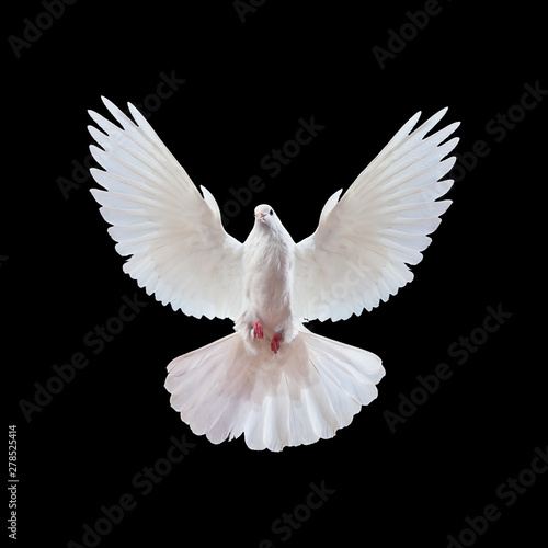 Foto op Plexiglas Vogel Flying white doves on a black background
