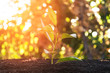 Young sprout. Sapling in the ground. Ecology.