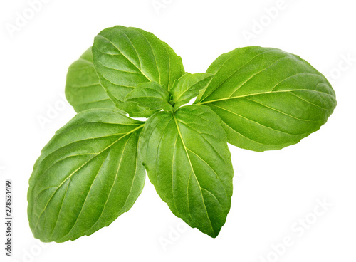 Canvastavla Green basil leaves