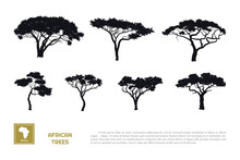 Black Silhouettes Of African Trees On White Background. Isolated Image Of Savannah Nature. Forest Landscape Of Africa. Acacia Icons