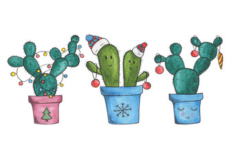 winter cactuses
