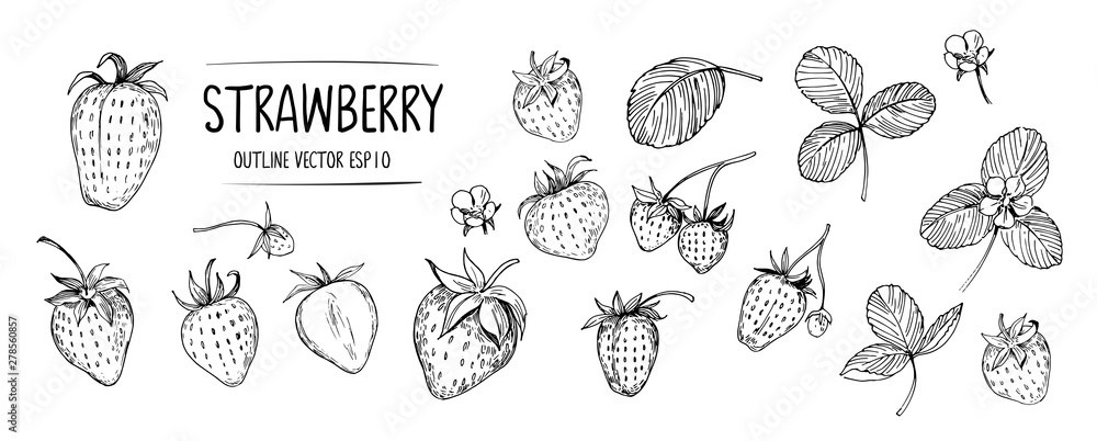 Fototapety, obrazy: Set of strawberry. Hand drawn outline with transparent background. Vector