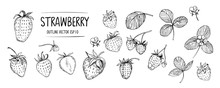 Set Of Strawberry. Hand Drawn Outline With Transparent Background. Vector