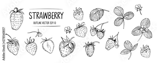 Fototapeta Set of strawberry. Hand drawn outline with transparent background. Vector obraz