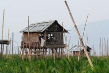 Bamboo Hut On Taunggyi Floatin...