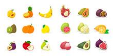 Tropical Fruits Vector Illustrations Big Set