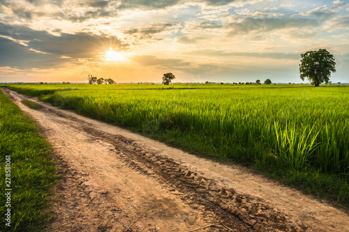 Rice Field Before Sunset Canvas