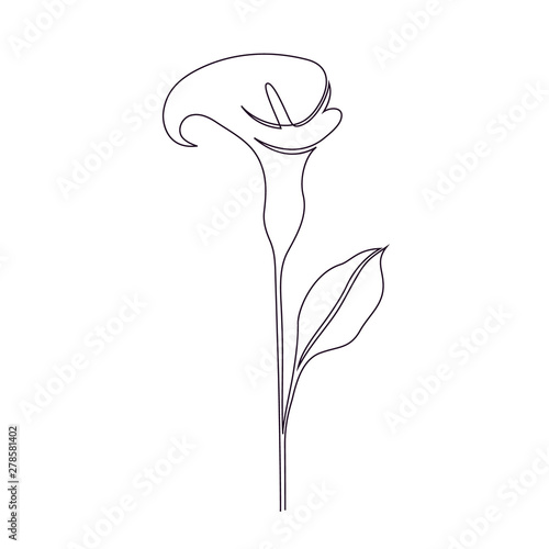 Valokuva Calla lily flower