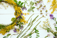 Wildflowers And Herbs On A Wo...