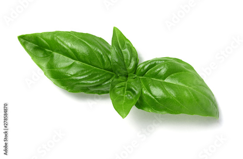 Fotografiet fresh basil leaves