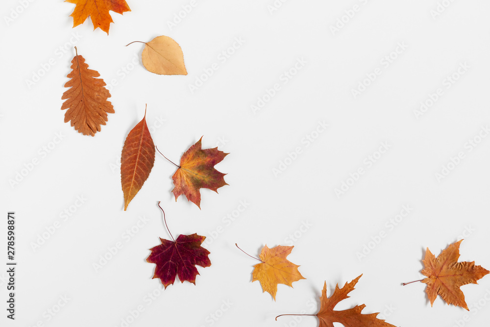 Fototapety, obrazy: Autumn creative composition. Dried  leaves on white background. Fall concept. Autumn background. Flat lay, top view, copy space