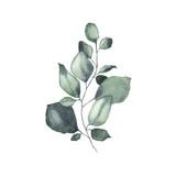 Akwarela tropikalnej zieleni kwiatowy liść roślina las zioło wiosna - 278602667