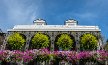 Flowers In French Quarter Of N...