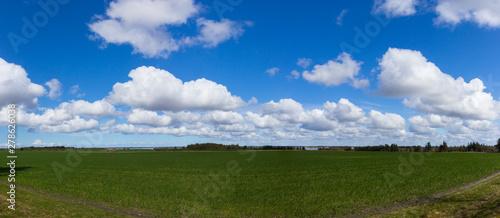 Obraz na plátně beautiful meadows north of Esbjerg, Jutland, Denmark