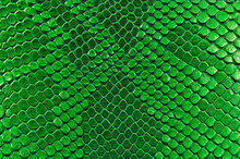Green Snake Skin, As Backgroun...