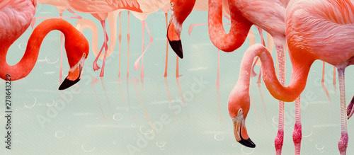 Flamingos. Design element, creative banner